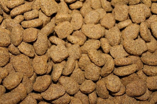dry dog kibble food