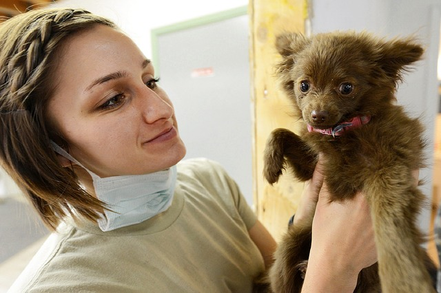 visit your vet