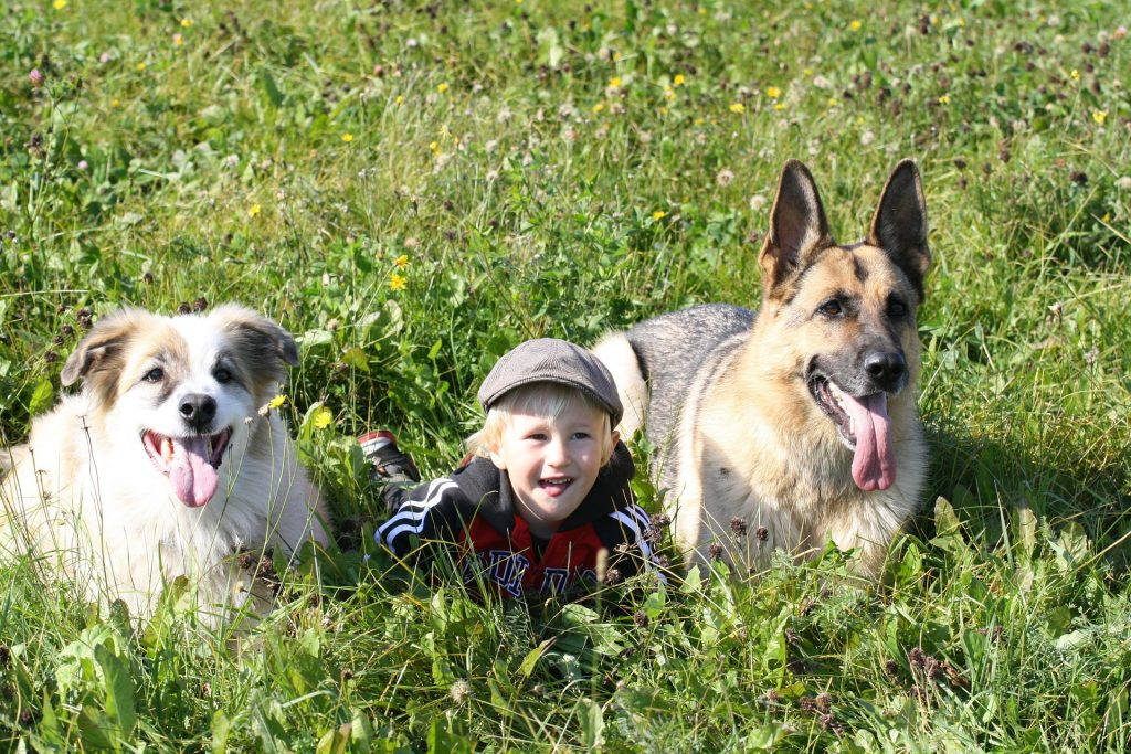 kid lying in grass next to a german shepherd and another dog