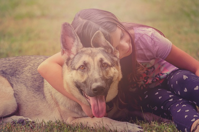 keeping your child safe with a german shepherd