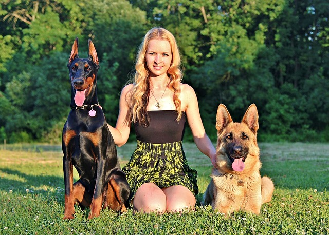 blonde woman sitting in grass with two dogs, a gsd and doberman, on each side of her