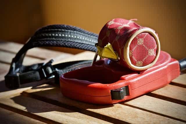 collar and leash training