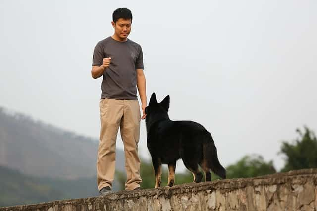 man standing in front of a german shepherd training them