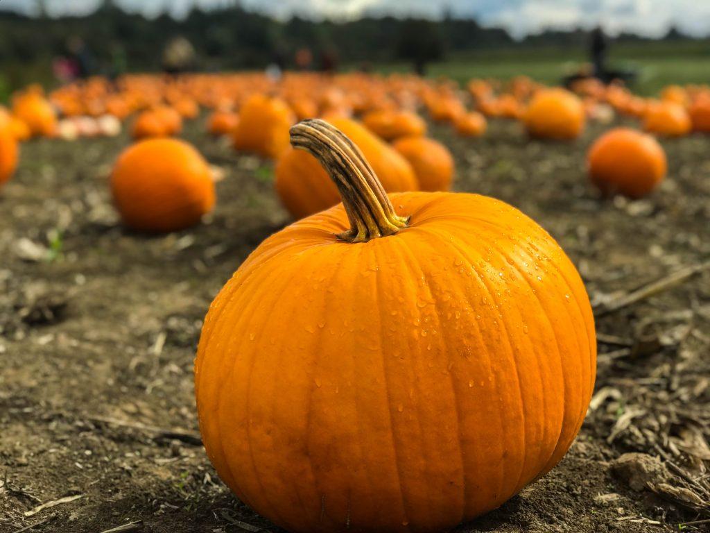 large orange pumpkin in a brown dirt field