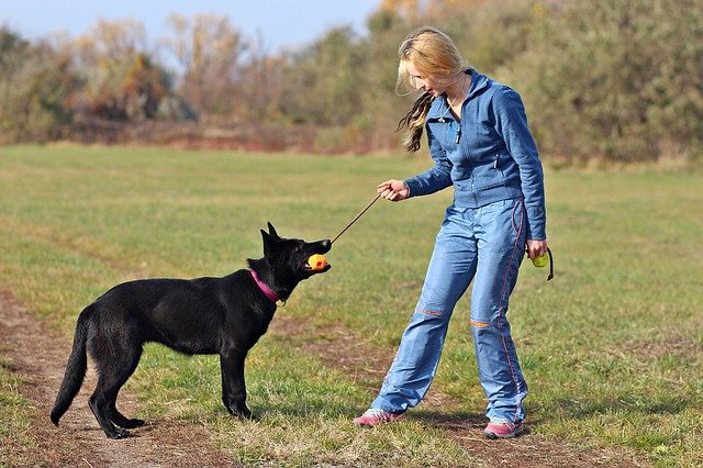 make your yard a pleasing retreat by playing with your german shepherd