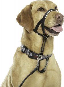 halti dog head collar