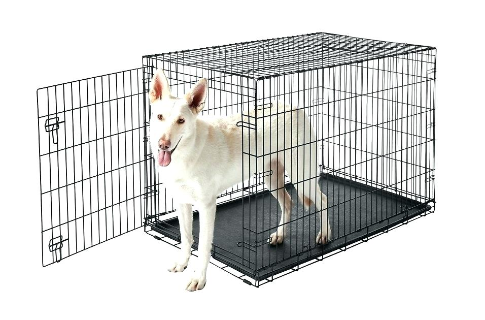 frisco fold and carry single door dog crate with a white german shepherd standing inside
