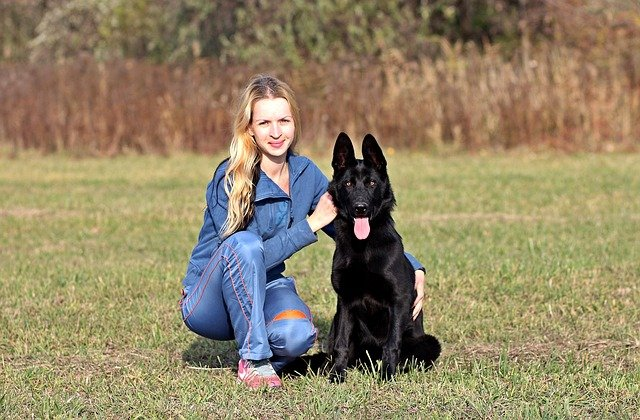 german shepherd dog squats