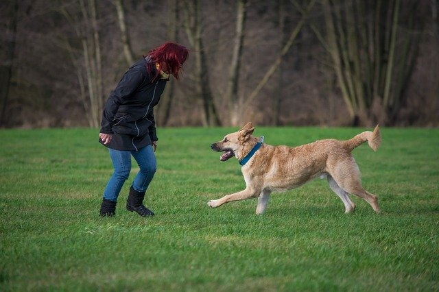 teach your german shepherd the come command