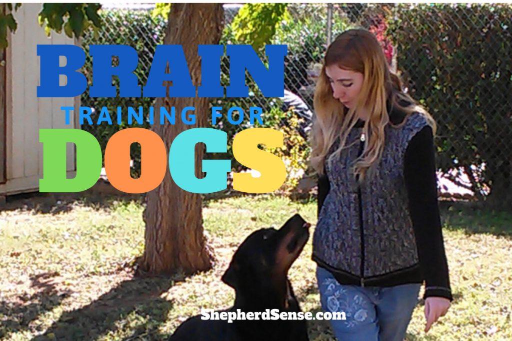 Adrienne Faricelli training her dog