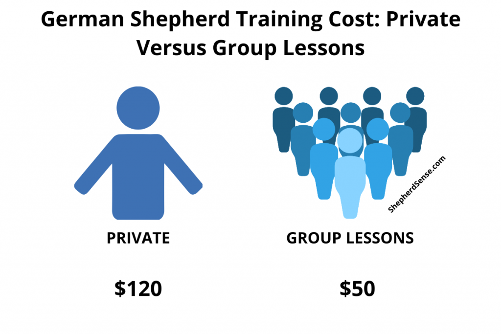 German Shepherd Training Cost_ Private versus Group Lesson Price