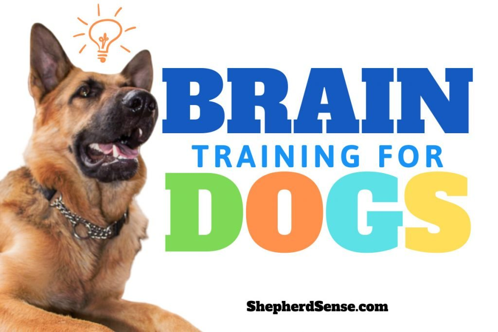 brain training 4 dogs official website