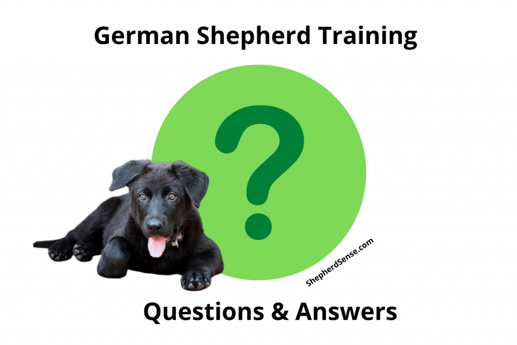 german shepherd training questions and answers
