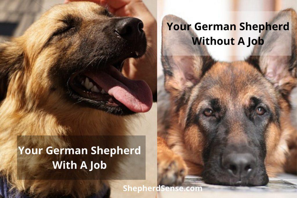 your german shepherd with a job versus your german shepherd without a job