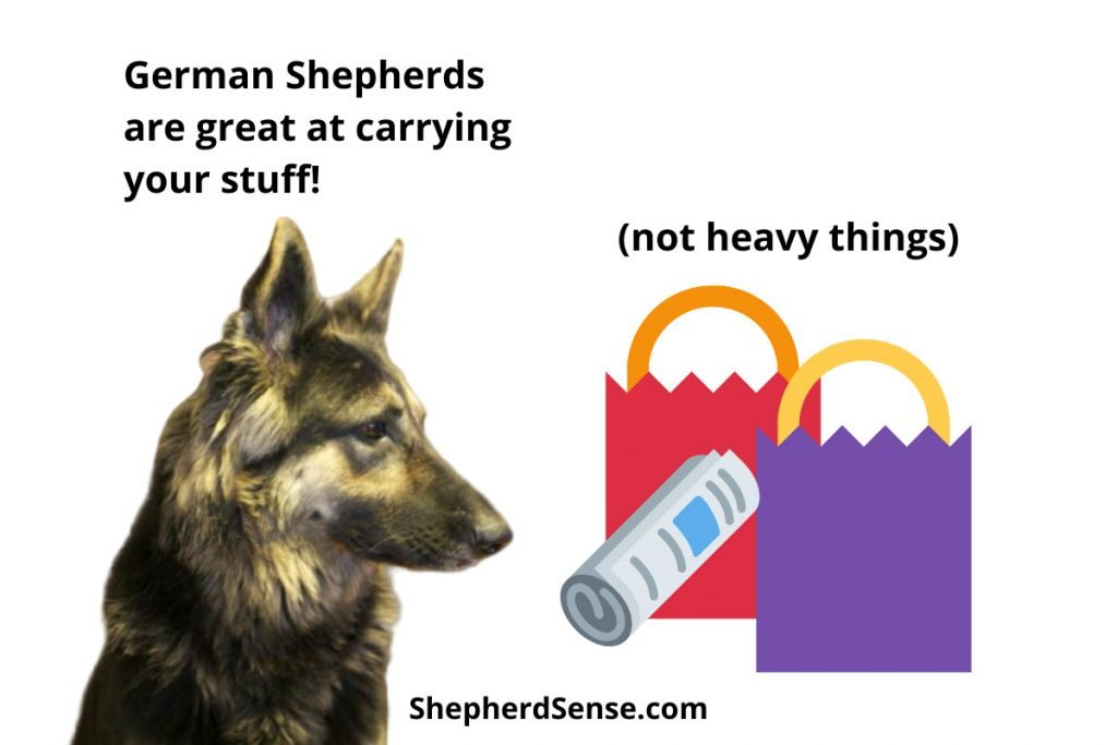 teach your german shepherd to carry your stuff