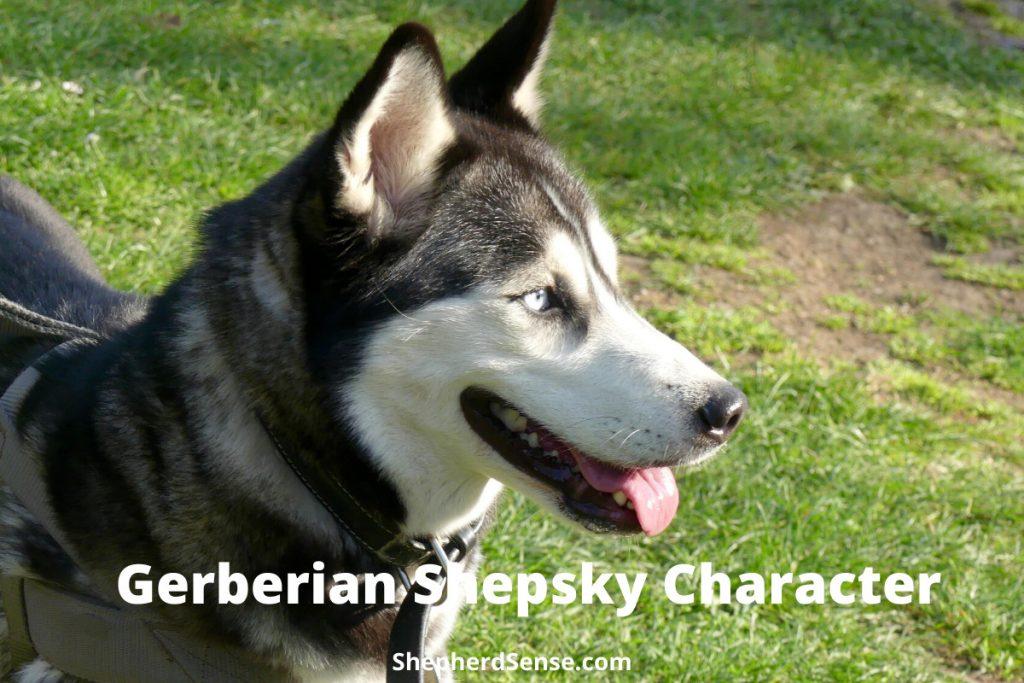 gerberian shepsky character