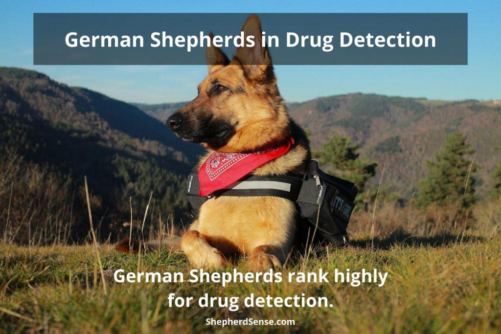 german shepherds in service