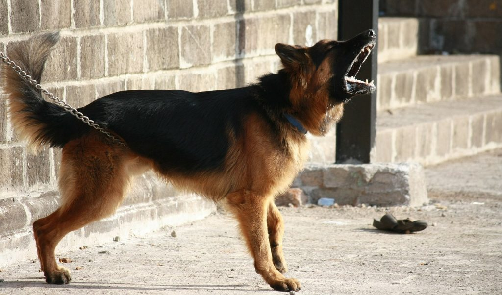 how to stop your german shepherd from attacking your other dog