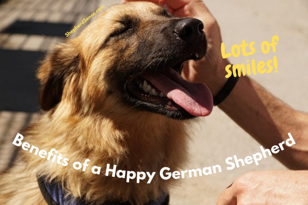 happy german shepherd smiling