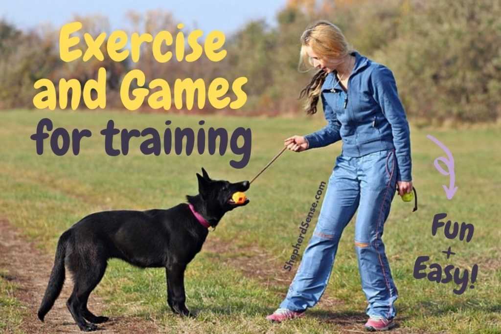 exercise and games for training your german shepherd