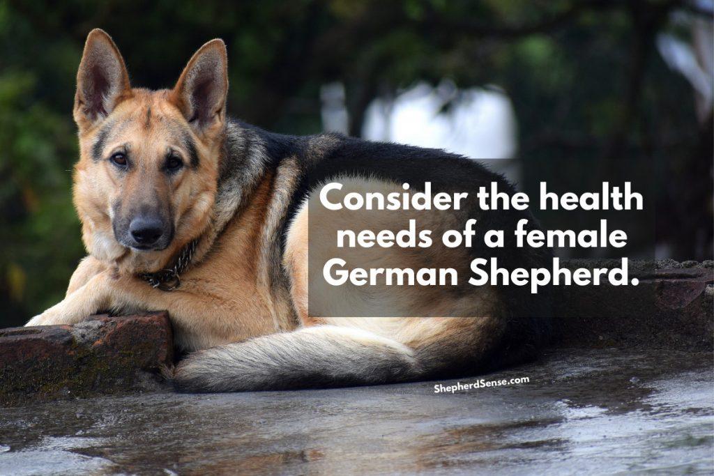 female german shepherd health needs
