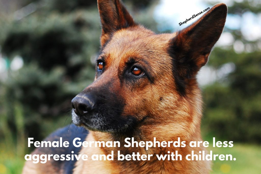 female german shepherd less aggressive than male