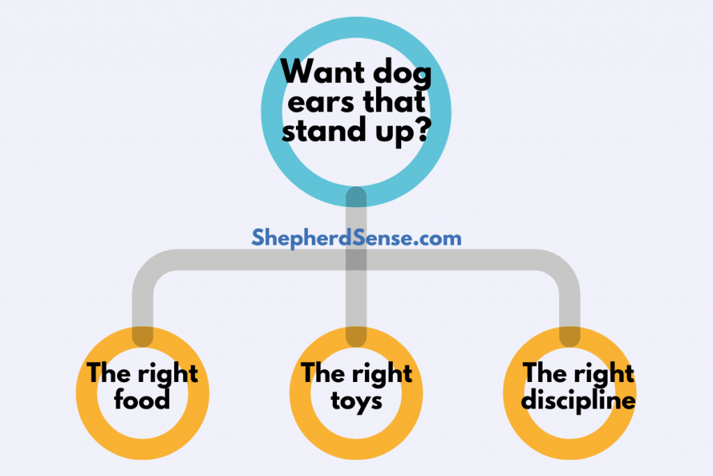 how to get a german shepherds ears to stand up