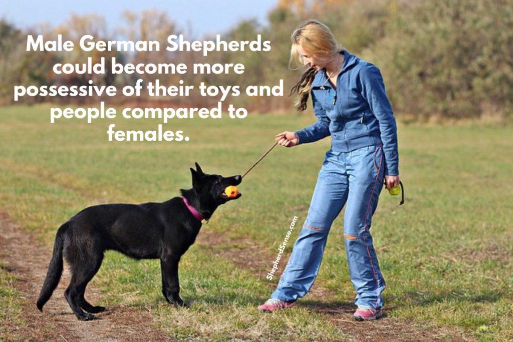 german shepherd possessiveness