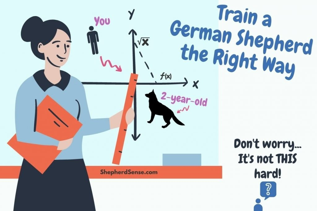 train a 2 year old german shepherd the right way