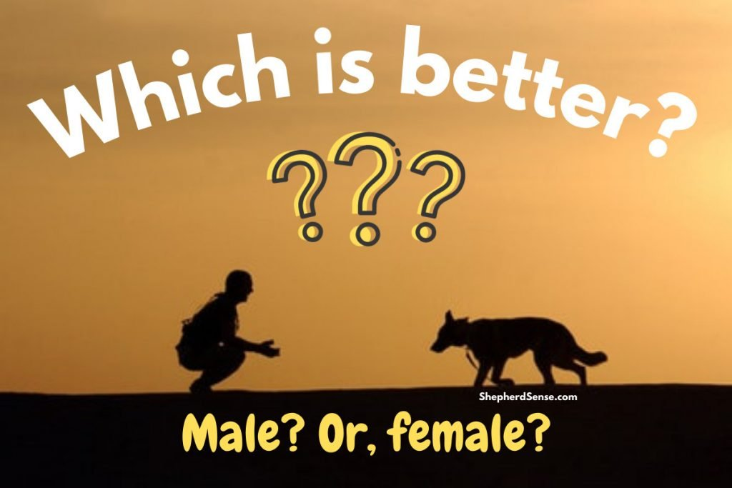 which is better a male or female german shepherd