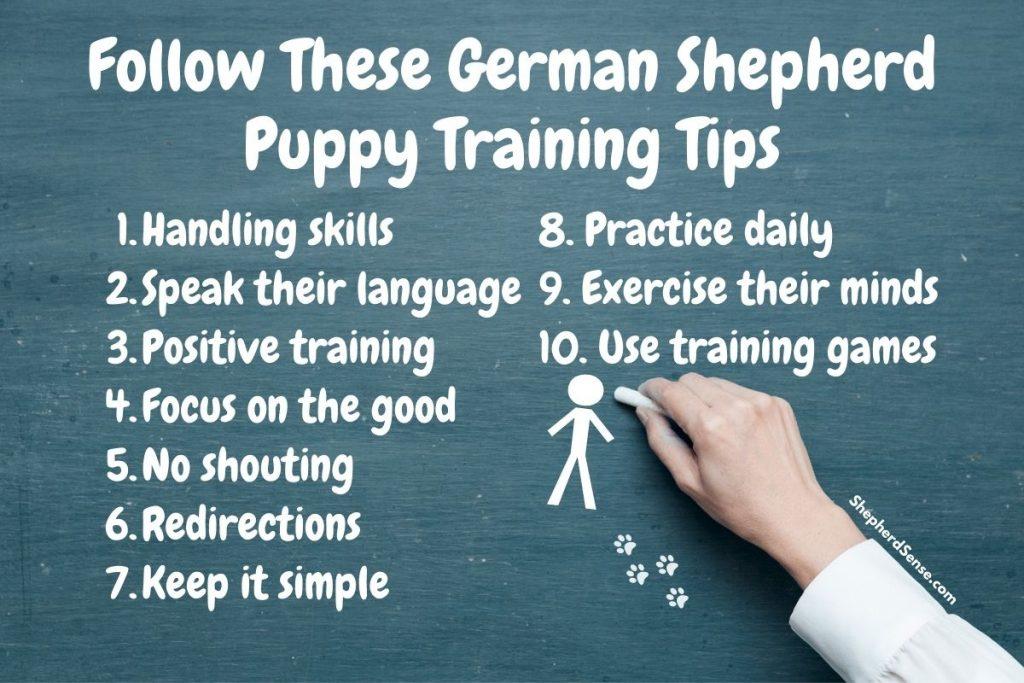 10 Easy German Shepherd Puppy Training Tips