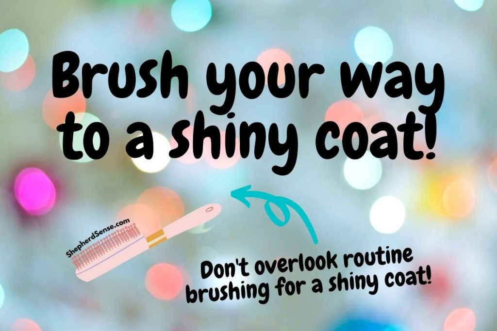 brush your way to a shiny coat