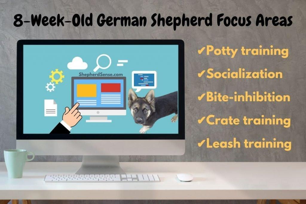 Focus Areas of 8 Week Old German Shepherd Puppy Training