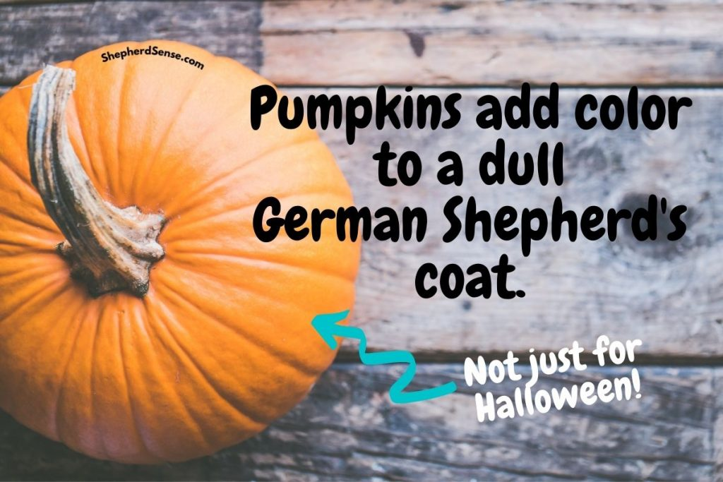 add color to a dull german shepherds coat