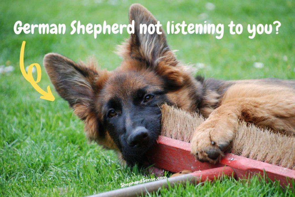 german shepherd not listening