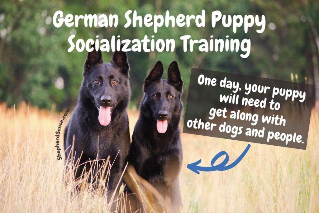 german shepherd puppy socialization training