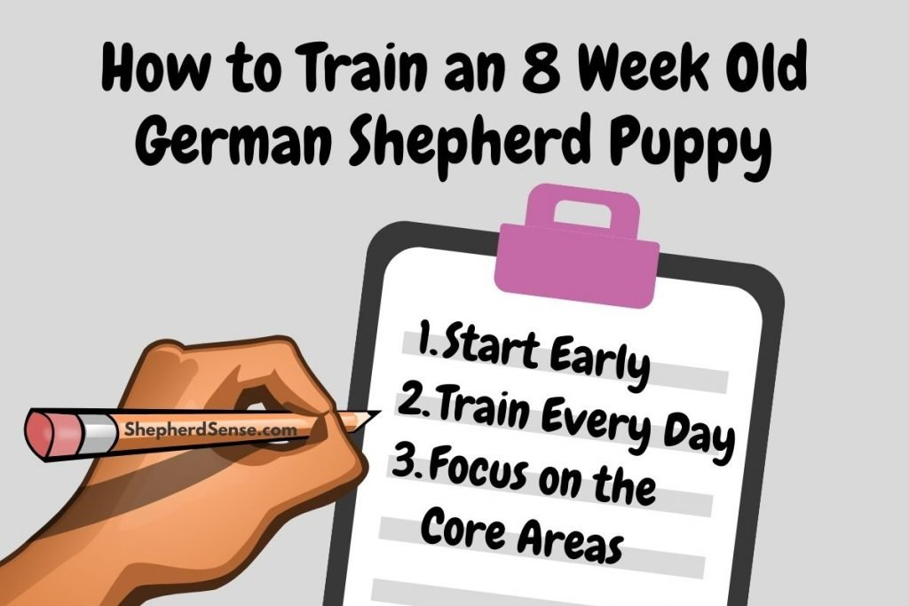 how to train an 8 week old german shepherd puppy