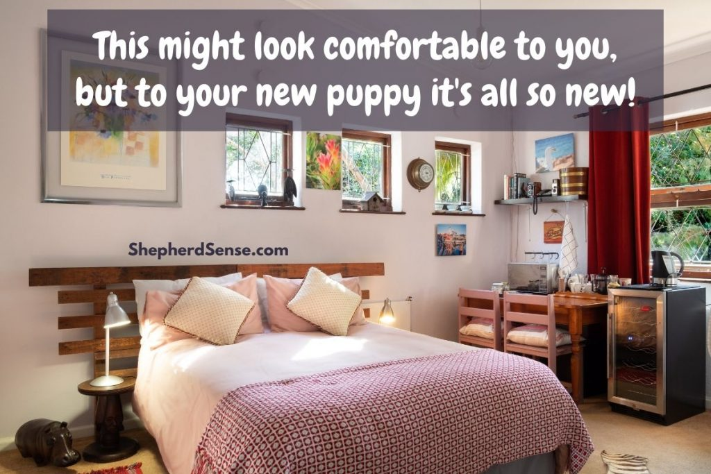 the first night with your puppy
