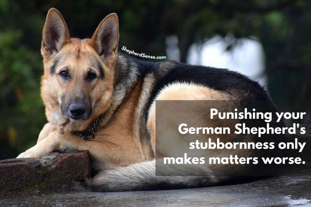 avoid punishing your german shepherd's stubbornness