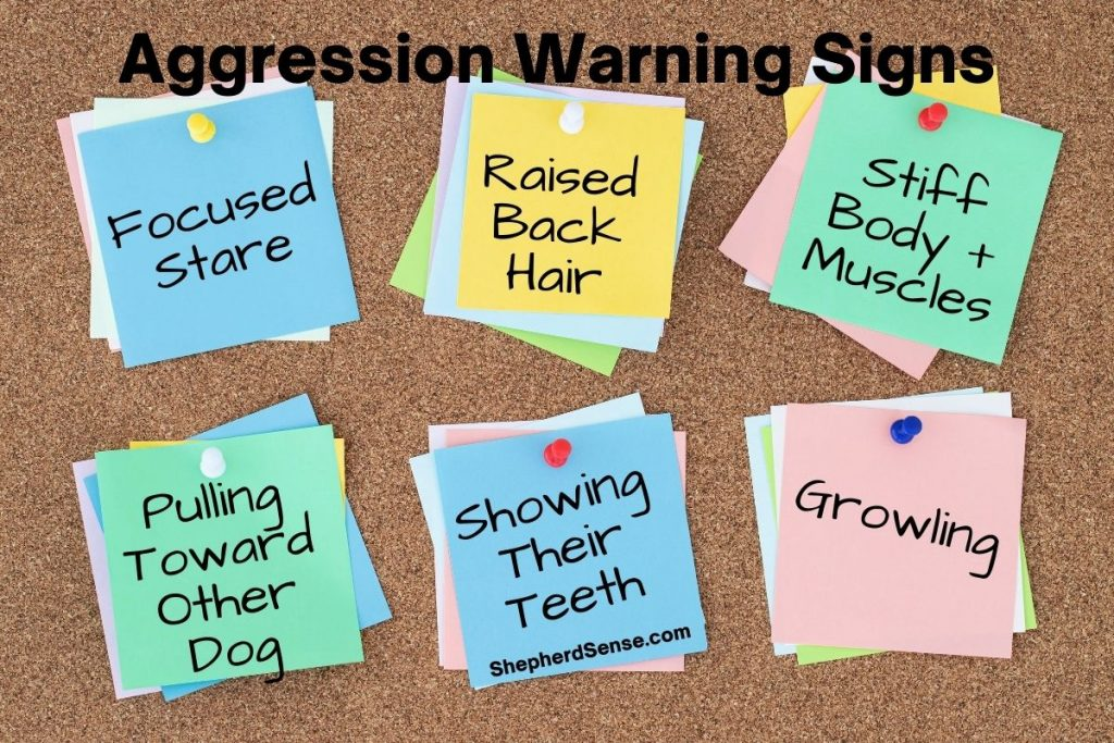 german shepherd aggression towards other dogs warning signs