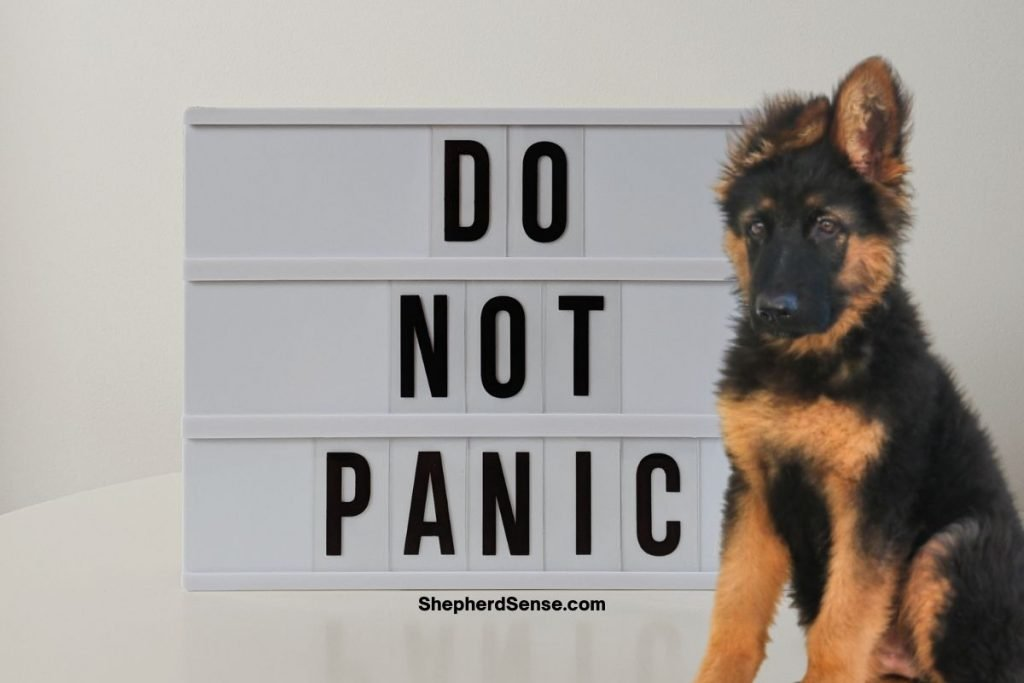 what not to do for your destructive german shepherd