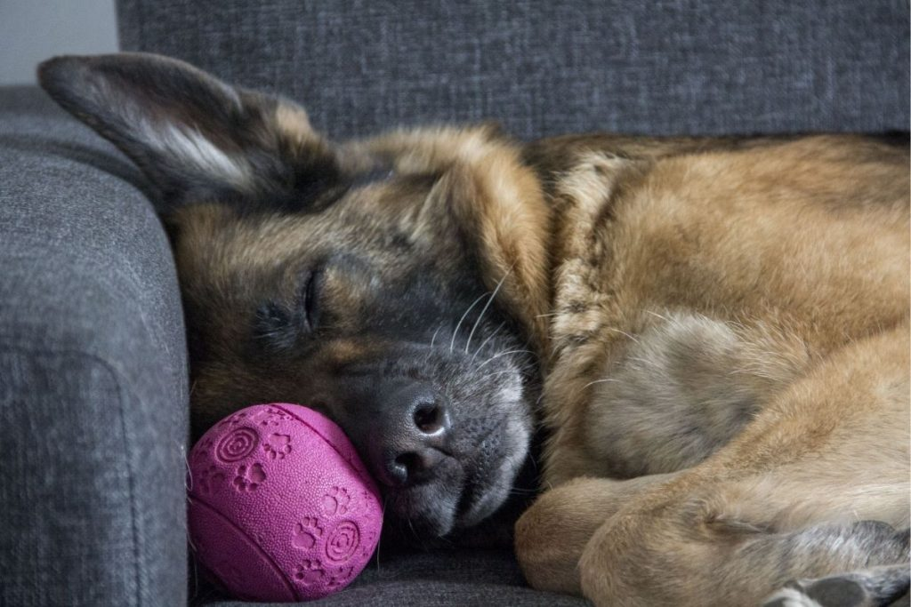 are puzzle toys good for german shepherds