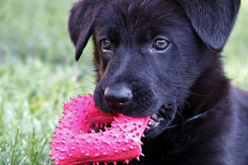 biting, nipping, and chewing are issues when you own a gsd puppy