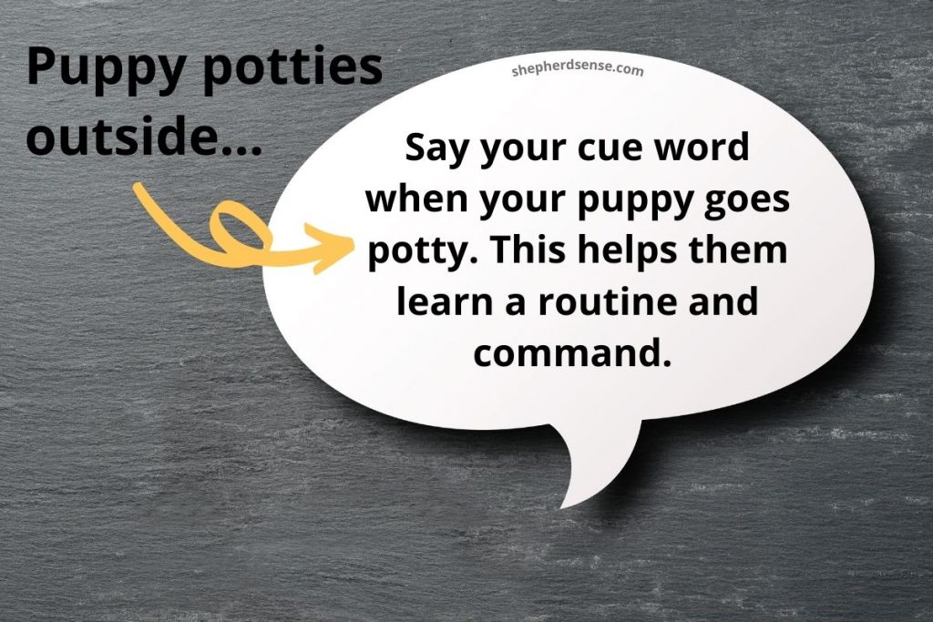 cuing your puppy to potty on command
