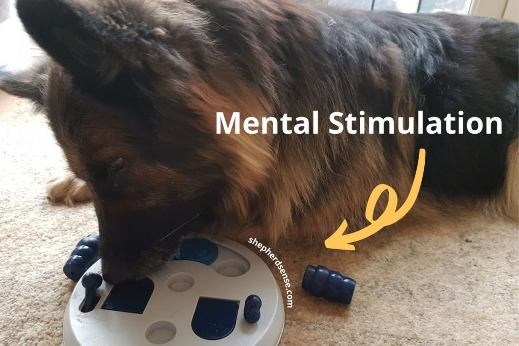 german shepherd mental stimulation when your dog is out of control