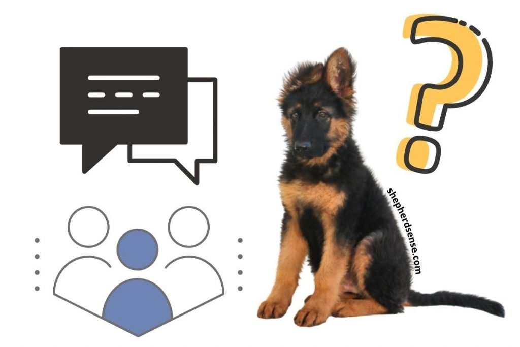 german shepherd puppy care means communicating information