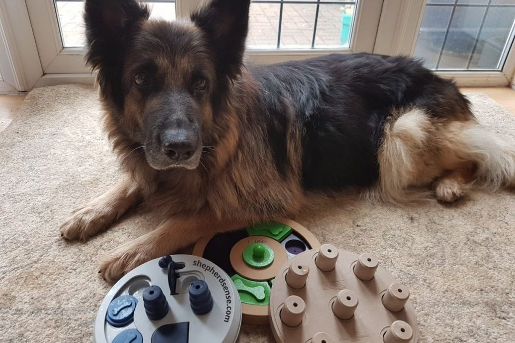 give your german shepherd a job at home