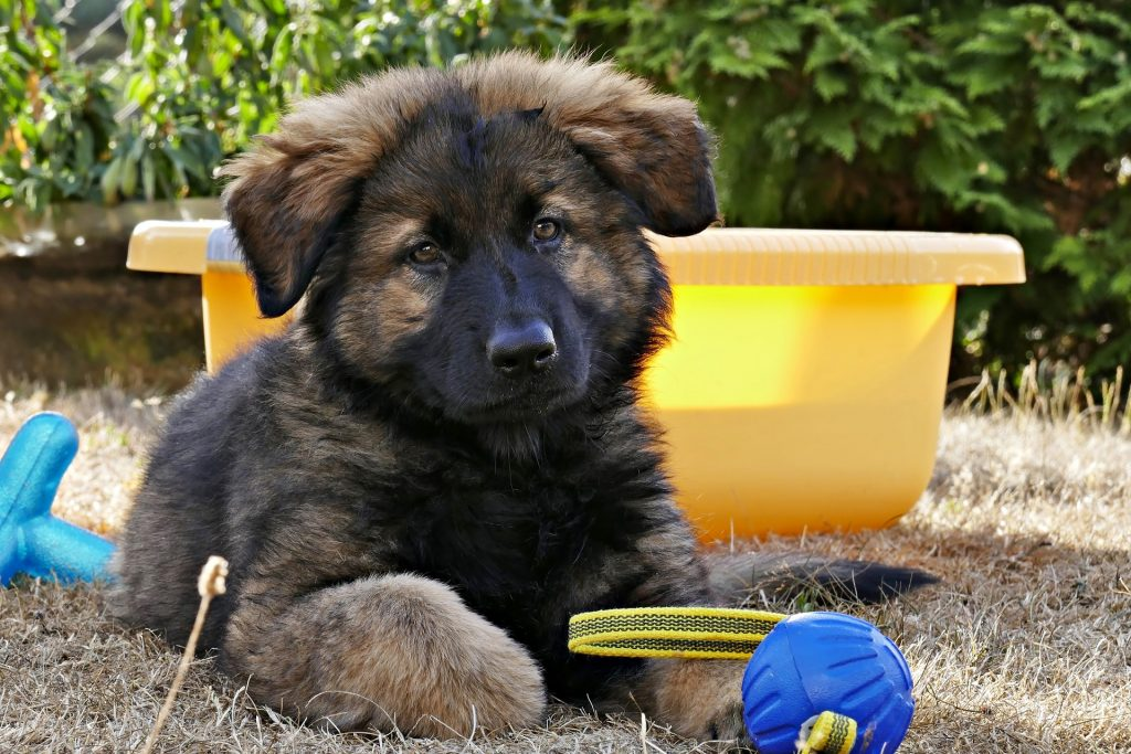 how to train a german shepherd puppy to come even when they can't see you