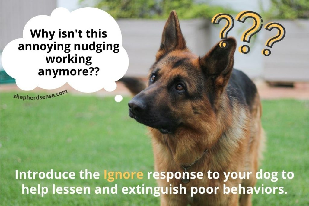 ignore is a powerful leadership statement for new gsd owners