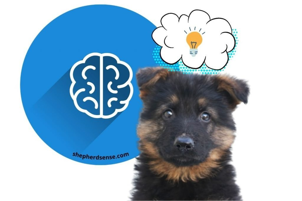 mental stimulation and training for taking care of your german shepherd puppy